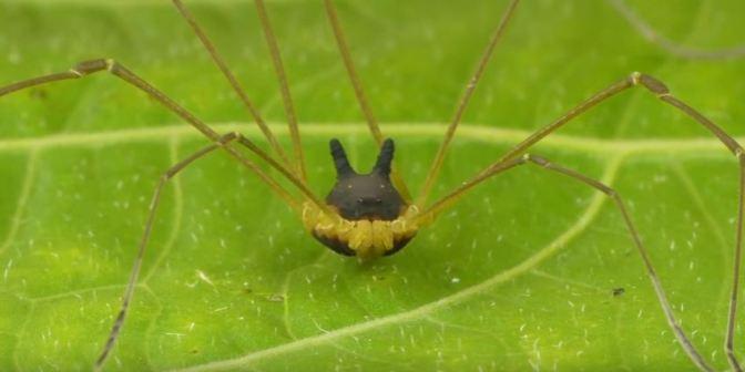 Araña de Ecuador se viraliza en Halloween
