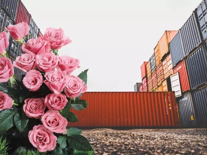 300 vuelos con rosas salen desde Quito